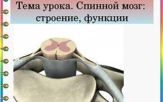 Строение спинного мозга презентация. Спинной мозг