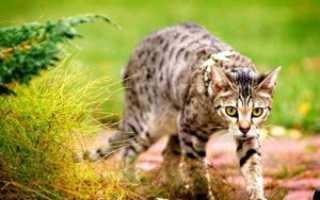 Варианты имен для кошек девочек. Имя котенка для девочек. Кличка по внешнему виду