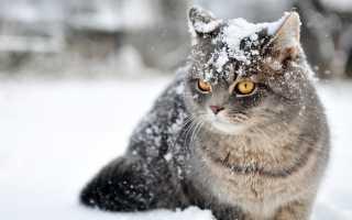 Красивые коты зимой. Коты и кошки зимойНа растения][