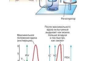 Оксигемоглобин: понятие, механизм образования, кривая диссоциации и её сдвиги. Факторы, влияющие на кривую диссоциации оксигемоглобина Диссоциация оксигемоглобина увеличивается при условии