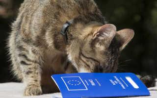 Как сделать документы коту. Как сделать ветеринарный паспорт кошке? (инструкция). Что указывается в паспорте
