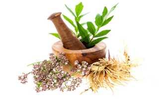 Валериана лекарственная ботаническое описание. Как применять корень растения валериана: народные рецепты