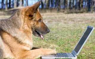 Наделены ли животные интеллектом. Животный разум