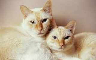Чем женщина отличается от кошки. Выбираем пол животного: кто лучше кот или кошка? Леди Нибелунг. Мягкая сила