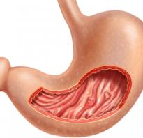Железы желудка состоят. Функциональная анатомия слизистой оболочки желудка. Железы желудка их виды и функции