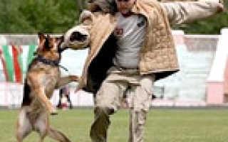 Дрессировка караульных собак. Дрессировка караульных собак Бегунок на даче для собаки