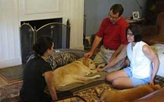Можно ли собаке давать валериану. Лучшее успокоительное для собак: отзывы, цены, описание