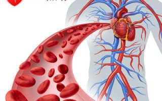 Какие препараты лучше принимать для кровообращения курящему. Большой обзор сосудистых препаратов для улучшения кровообращения