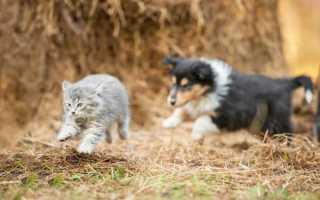 Почему кошки не любят собак мультфильм. Почему кошки и собаки враждуют? Что об этом думает кошкаКрапивница][