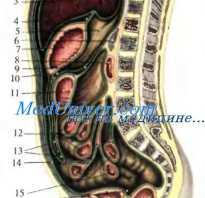 Где расположена полость брюшины. Париетальная брюшина. Топография органов верхнего этажа