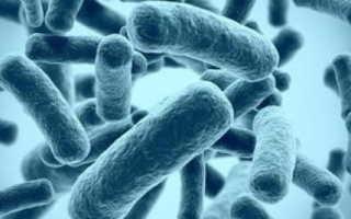 Полезные и вредные бактерии человека. Бактерия — друг человека! Какие микробы помогают организму? Все о полезных бактерияхЗаболевания][