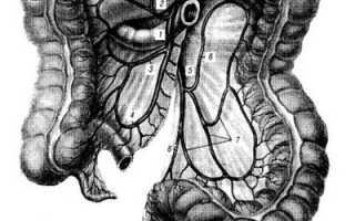 Иннервация тонкой и толстой кишки. Тонкий отдел кишечника. Кровоснабжение толстой кишки