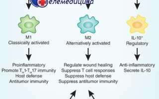 Что такое макрофаги? GcMAF уникальный препарат для активации деятельности макрофагов. Ученые нашли способ регулировать активность макрофагов Основные функции макрофагов включают