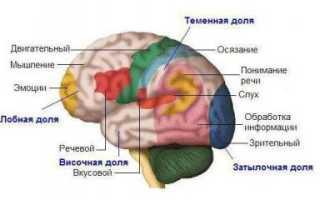 Органы чувств анализаторы орган зрения. Органы чувств. Анализаторы. Сколько основных органов чувств у человека