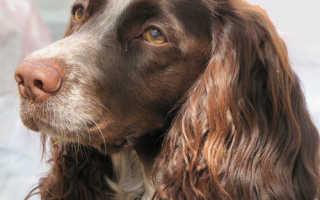 Сочинение на тему мое любимое животное собака. Топик по английскому языку на тему животные Сообщение животное которое мне нравится