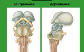 Объемное образование 4 желудочка головного мозга. Микронейрохирургия опухолей ствола мозга. Лечение опухолей желудочков головного мозга