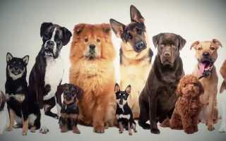 Клички для животных по алфавиту. Прикольные клички для собак, котов и не только. Чем живут политики