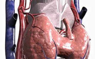Гистология щитовидной железы: как проходит, расшифровка результатов. Строение и функции щитовидной железы. Околощитовидные железы. Развитие околощитовидных желез. Строение околощитовидных желез. Гормоны околощитовидных желез Источник развития главных клет
