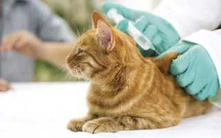 Когда лучше делать прививку котенку. Когда нужно делать прививки котятам. Особенности и нюансы вакцинации. Противоглистная обработка – препараты