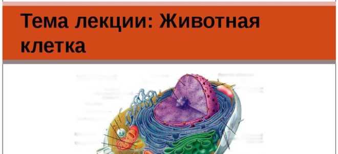 Презентация особенности строения животной клетки. Презентация по биологии «строение животной клетки»