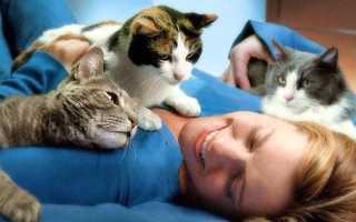 Польза кошек для детей. Какая польза от кошки в квартире. Как кошки влияют на самочувствие человека