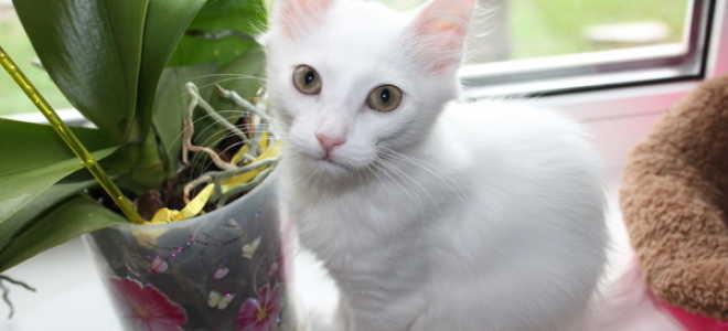 Глухие кошки мяукают. Как общаться с глухой кошкой. Симптомы глухоты у кошек
