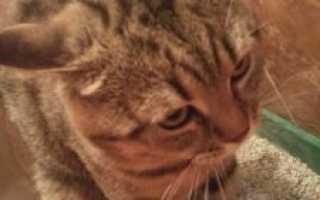Что можно дать кошке от поноса. Причины поноса у кошек