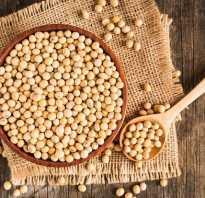Здоровое питание основа процветания. Здоровое питание — основа процветания! Соевой шрот и полножирная соя