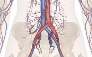 Кровоснабжение и иннервация яичника. Висцеральные ветви: яичковая артерия, нижняя брыжеечная артерия Ветви каких артерий кровоснабжают яичник