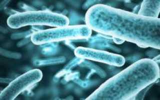 Полезные и вредные бактерии. Какие бактерии самые опасные для человекаНа продукты][