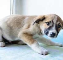 Собака скулит на прогулке. Почему собака скулит и как быть? Почему собака скулит, дрожит, прячется