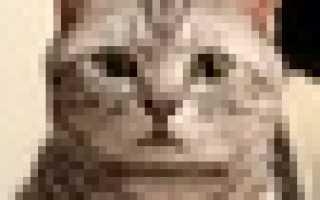 Животное которое не кому не нравится. Сочинение-описание внешности животного: У меня есть кошка. Хомяки и морские свинки