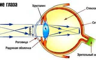 Сколько палочек в сетчатке глаза. Как устроен глаз и что такое светочувствительность у палочек рецепторов сетчатки глаза? Роль фоторецепторов в строении глазного яблока
