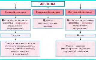 Взаимодействие желез внутренней секреции. Глава IX. Физиология эндокринной системы. Этапы переваривания пищи