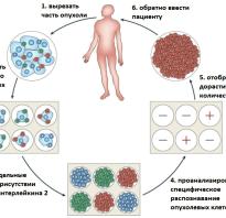Активированные т лимфоциты. Активность cd4 т-клеток воспаления. Т-клетки взяли под контроль