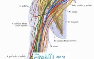 Топографическая анатомия срединного нерва. Срединный нерв, его топография, ветви и области иннервации. Экзаменационные вопросы: Общие теоретические вопросы