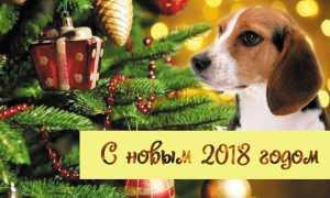 Поздравительные открытки на новый год собаки. Открытка с мордочкой щенка