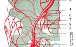 Анатомия тазобедренного сустава человека: строение мышц и связок и костей. Коллатеральное кровообращение в области тазобедренного сустава. Коллатерали тазобедренного сустава. Коллатеральные сосуды тазобедренного сустава Кровоснабжение тазобедренного суста