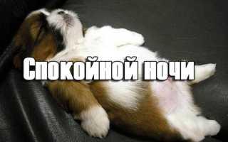 Веселое пожелание спокойной ночи другу. Прикольные пожелания спокойной ночи любимой