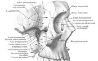 Анатомия подвисочной ямки (fossa infratemporalis). Значение височная ямка в медицинских терминах Височные впадины
