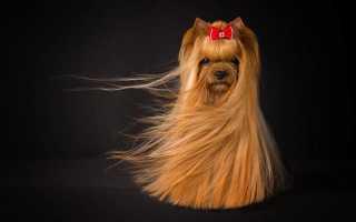 Профессиональный шампунь для собак с длинной шерстью. Шампуни и кондиционеры для собак. Лечение шерсти и кожного покрова