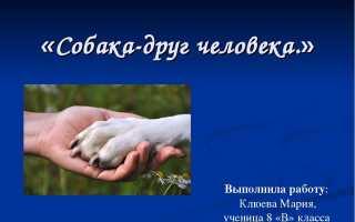 Презентация на тему собака верный друг человека. Презентация на тему «Почему собака друг человека»