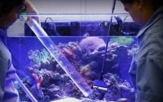 Можно ли добавлять в аквариум марганцовку. Как продезинфицировать аквариум самыми известными способами? Специализированные препараты из ветаптеки