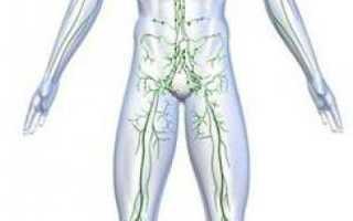 Какой тканью представлена иммунная система в организме. Органы иммунной системы
