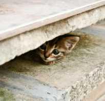 Как найти котенка который спрятался. Что делать, если пропал кот