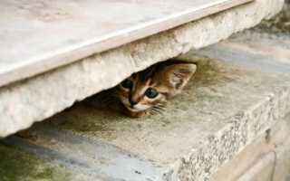 Как найти пропавшую кошку. Если кошка потерялась? Где и как ее искать? Подать объявление пропал кот