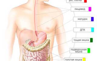 Отделы желудка человека. Желудок — анатомия и физиология. Микроскопическая анатомия желудка