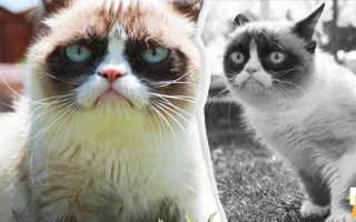 Кот, который покорил интернет и сердечки. Сердитая кошка Grumpy Cat ушла в лучший мир, но оставила мемы. Грустный кот грампи кэт Сердитый кот мем