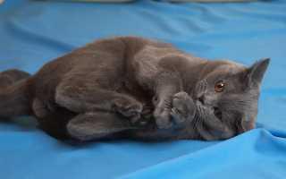 Паста для выведения шерсти у котят. Корм и паста для кошек и котов для выведения шерсти из желудка. Видео о том, как кот ест пасту для выведения шерсти