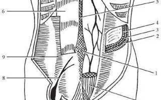Передняя брюшная стенка топографическая анатомия. хирургия грыж. Особенности переднебоковой стенки живота у новорожденных и детей